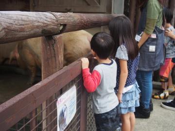児童発達支援 こぱんはうす さくら 松戸六高台教室のアルバイト情報